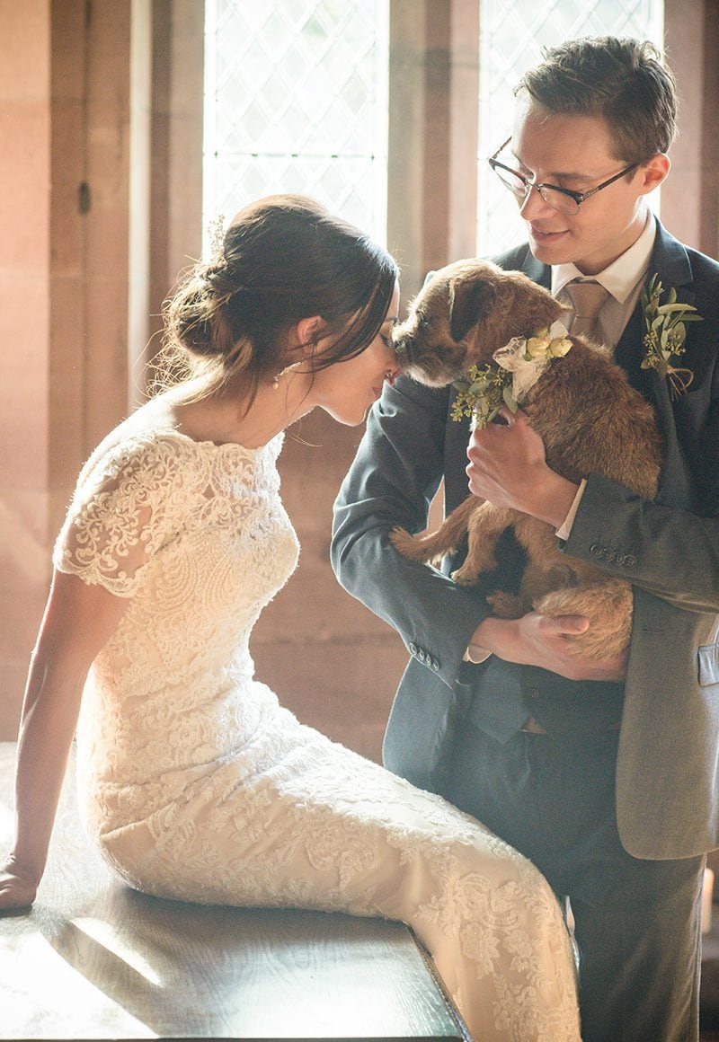 The Great Hall Peckforton Castle Border Terrier puppy Catherine Bradley Photography